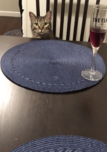 I made my wife mad so my kitty Milo was my date