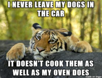 I never leave my dogs in the car