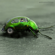 I photoshopped a beatle into a beetle into a beetle