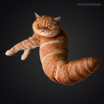 I photoshopped a cat into a croissant for you