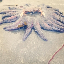 I present to you a crab riding a starfish ladies and gentleman Tofino BC Canada