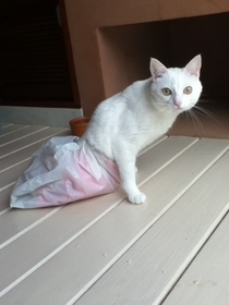I put a plastic bag on my paraplegic cat Elsa so she can explore outside and keep her diapers and pants dry on wet days