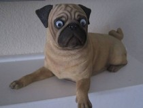 I put googly eyes on a pug I cant even tell the difference