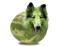 I see your Melon Cat and raise you a Melon Collie