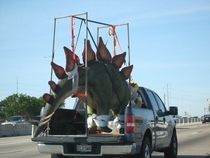 I see your T-Rex on a flatbed and raise you a Stegosaurus in a pickup