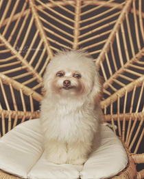 I spotted this incredibly smug looking dog on a pet photography fb group