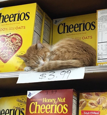 I think its a new flavor Cheerios cat meal I think
