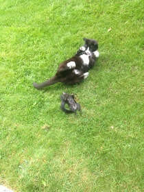 I think my cat is mocking the squirrel it murdered