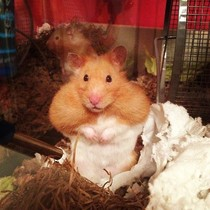 I think my hamster spends too much time on his exercise wheel