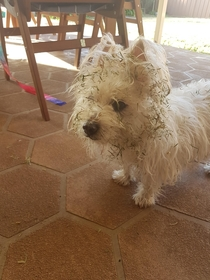 I think next time ill bath the dog AFTER mowing the lawn