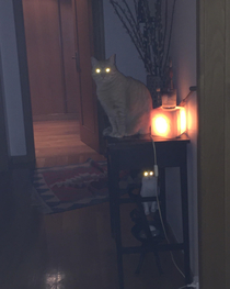 I think somehow my cats are sucking the Light from The table lamp