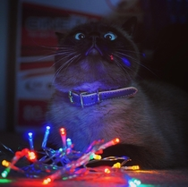 I thought itd be cute to get a photo of my cat with fairy lights
