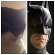 I thought my girlfriends cat looked familiar