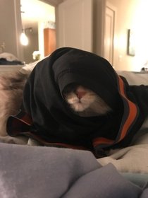 I threw my boxers on my cat and she turned into a Sith Lord