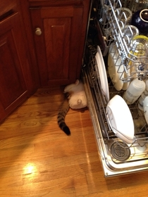 I walked into the kitchen and was greeted by this