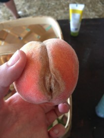 I was innocently trying to eat a peach today for breakfast when suddenly