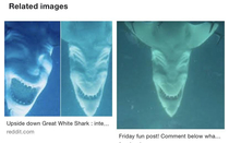 I was just doing a little research about sharks and accidentally discovered that the underside of a great white shark looks like an evil laughing demon