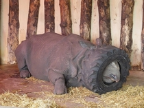 I went to the zoo but the Rhino was tired