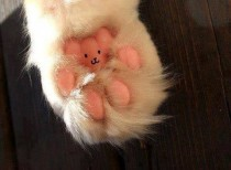 I will never look at my cats paws the same