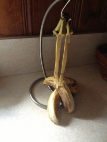 I woke up to find that my bananas had committed suicide