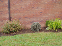 I work at a small public high school We take Halloween very seriously The middle bush is one of my students dressed in a ghillie suitbest way to cut class and not get caught EVER