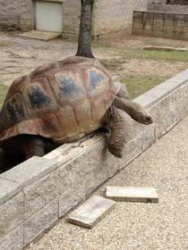 I work at a zoo and today a lb tortoise tried to escape