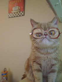If Bubbles was a cat