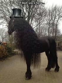 If Slash was a horse