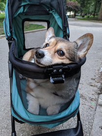 If you are  in Corgi years then you get a stroller
