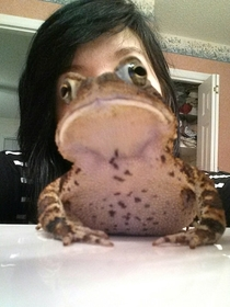 Ignore beautiful girl hypnotoad is here