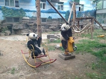 Im fairly certain pandas are just an extremely elaborate hoax