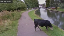 Im glad Google is taking cow privacy seriously