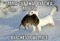 Imma get that Bitch a mouse