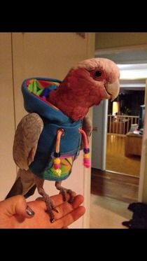 In case you had never seen one heres a bird wearing a hoodie