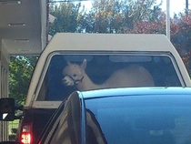 In line at the McDonalds drive-thru