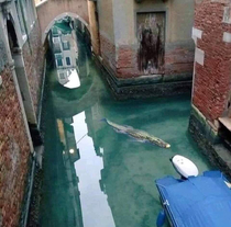 In Venice the pollution has reduced so much that even Louis Vuitton bags are starting to swim again