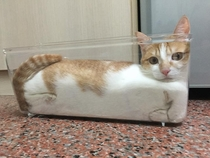 Indisputable Proof That Cats Are Actually Liquid