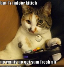Indoor Kitteh