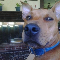 Is it just me or does this dog look like the real life Scooby-Doo