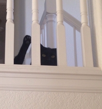 It looks like my cat is waving from the top of the stairs Hes just licking his junk