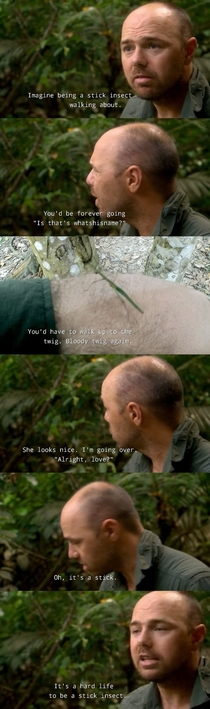 Its a hard life to be a stick insect