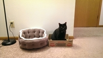 Ive conducted an experiment Findings Cat beds are a waste of money