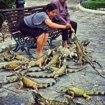 Ive heard of old ladies feeding pigeons but this is ridiculous