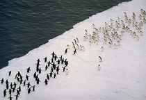 Just a massive penguin battle