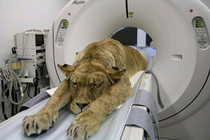 Just a routine CAT scan