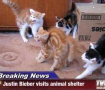 justin beiber visits animal shelter cats have hilarious reaction