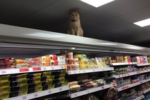 Khajiit has wares if you have coin