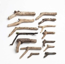 Kids firearm collection