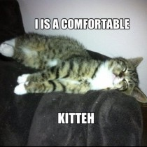 Kitteh is comfy