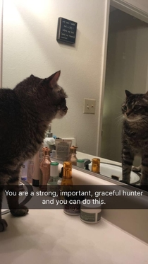 Kitty pep talk